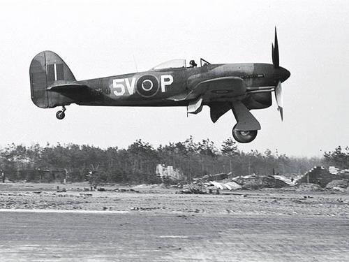 typhoona50